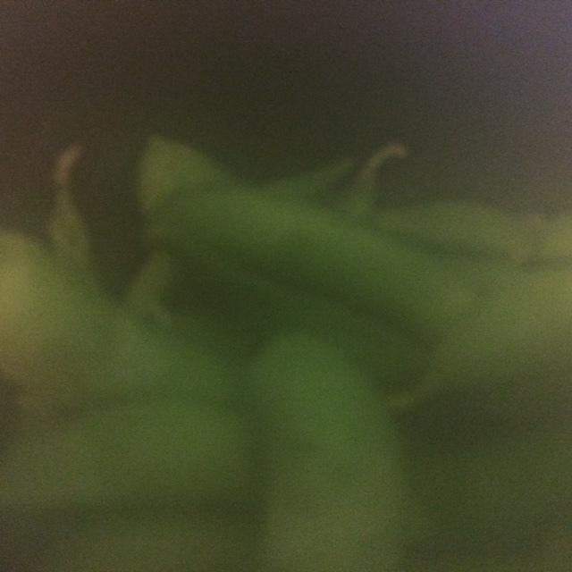 枝豆ニチレイ7.JPG